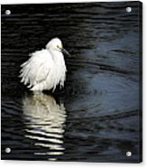 Reflections Of An Egret  Acrylic Print