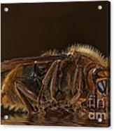 Reflexion D'un Hornet  Acrylic Print