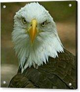 Regal Eagle Portrait Acrylic Print
