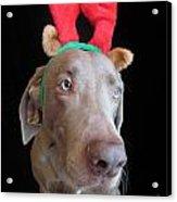 Reindeer Doggie Acrylic Print