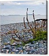 Relax Acrylic Print by Extrospection Art