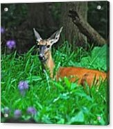 Relaxing In The Morning Acrylic Print