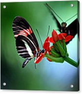 Reservations For Two Acrylic Print