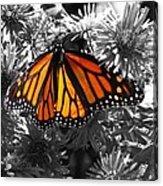 Resplendence Acrylic Print