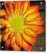 Resplendent Beauty Acrylic Print
