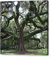 Resurrection Oak Acrylic Print