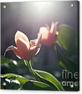 Reverence Acrylic Print by Rossi Love