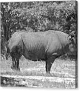 Rhino In Black And White Acrylic Print