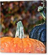 Rich Autumn Colors Acrylic Print
