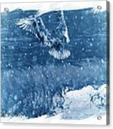 Riding The Wave The Gull Acrylic Print