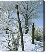 Rime From Rare Fog Coats Fence Acrylic Print