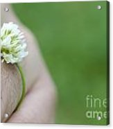 Ring Flower Acrylic Print