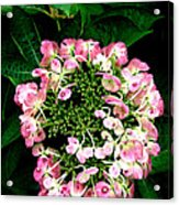 Ring Of Pink Acrylic Print
