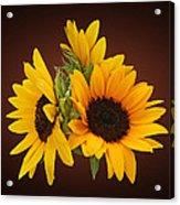 Ring Of Sunflowers Acrylic Print