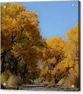 Rio Grande Cottonwoods Acrylic Print by Denice Breaux