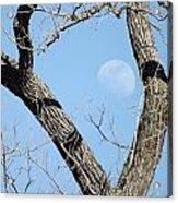 Rising Moon Acrylic Print