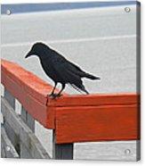 River Crow Acrylic Print