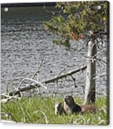 River Otter Acrylic Print