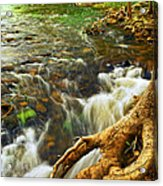River Rapids Acrylic Print by Elena Elisseeva