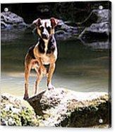 Riverdog Acrylic Print