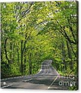 Road To Gatlinburg Tn Acrylic Print by Elizabeth Coats