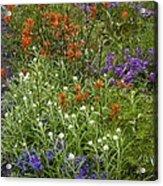 Roadside Flowers, Cascade Mountains, Usa Acrylic Print