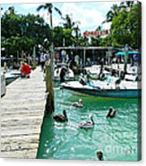 Robbies Of Islamorada Acrylic Print