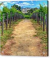 Robert Mondovi Vineyard Path Acrylic Print