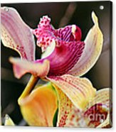 Rocking Chair Orchid Acrylic Print