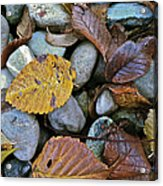 Rocks And Leaves Acrylic Print