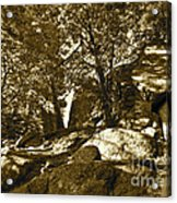 Rocks And Trees 1 Sepia Acrylic Print