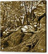 Rocks And Trees 2 Sepia Acrylic Print