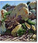 Rocks And Weeds II Acrylic Print