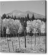 Rocky Mountain High Country Autumn Fall Foliage Scenic View Bw Acrylic Print