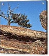 Rocky Tree Acrylic Print