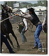 Rodeo Wild Horse Race Acrylic Print
