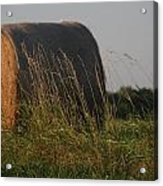 Rolled Bales Of Hay Acrylic Print