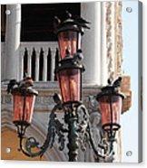 Roman Pigeons Acrylic Print
