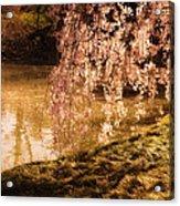 Romance - Sunlight Through Cherry Blossoms Acrylic Print