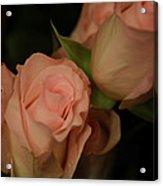 Romance In Pink Acrylic Print