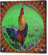 Rooster Colors Acrylic Print