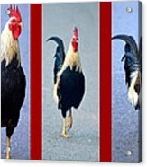 Rooster Triptych Acrylic Print