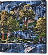 Rooted In Solid Rock Acrylic Print