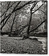 Rooted Within The Gravel Acrylic Print