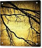Roots At Night Acrylic Print by Michael L Kimble