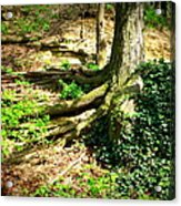 Roots Acrylic Print by Maria Scarfone