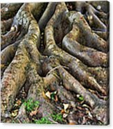Roots Of Glory Acrylic Print