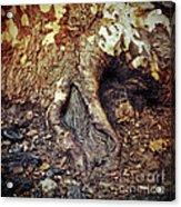 Roots Acrylic Print by Silvia Ganora