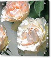 Rose 125 Acrylic Print