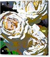 Rose 126 Acrylic Print